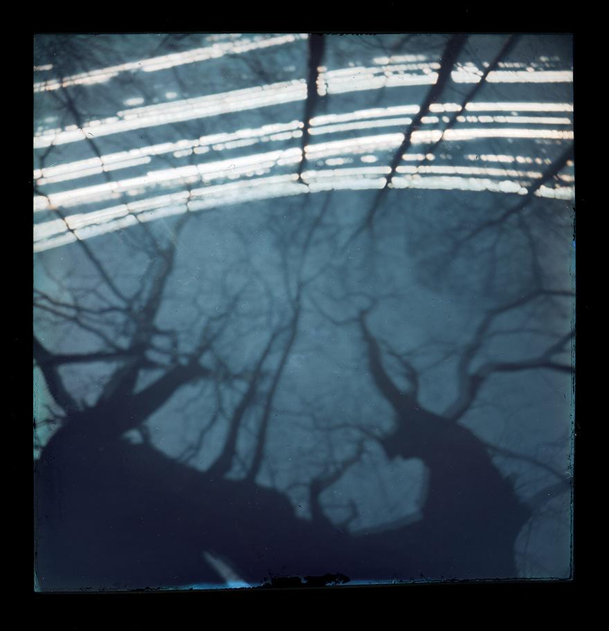 solarigrafia_drzewo1